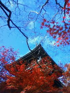f:id:kusaboshi:20091126142000j:image