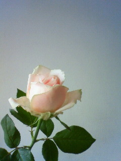 f:id:kusaboshi:20091129114700j:image