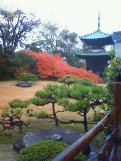 f:id:kusaboshi:20091203134600j:image