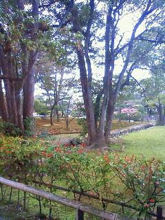 f:id:kusaboshi:20100318133600j:image