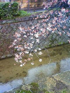 f:id:kusaboshi:20100325152300j:image