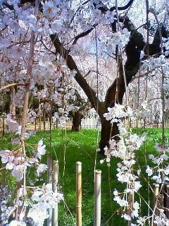 f:id:kusaboshi:20100326103500j:image