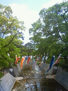 f:id:kusaboshi:20100513123700j:image