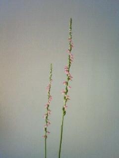 f:id:kusaboshi:20100704132600j:image
