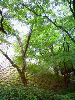 f:id:kusaboshi:20100812170600j:image