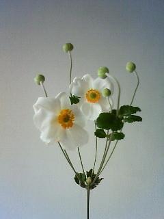 f:id:kusaboshi:20101022131800j:image
