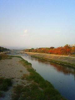 f:id:kusaboshi:20101112161500j:image
