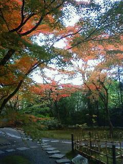 f:id:kusaboshi:20101125141400j:image
