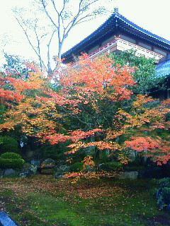 f:id:kusaboshi:20101125144900j:image