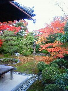 f:id:kusaboshi:20101125145600j:image