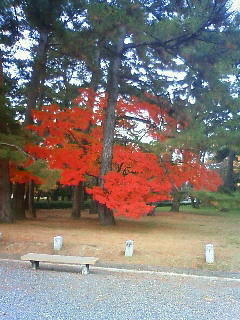 f:id:kusaboshi:20101125153800j:image