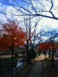 f:id:kusaboshi:20101204094800j:image