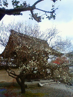 f:id:kusaboshi:20110224152300j:image