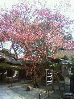 f:id:kusaboshi:20110314103800j:image