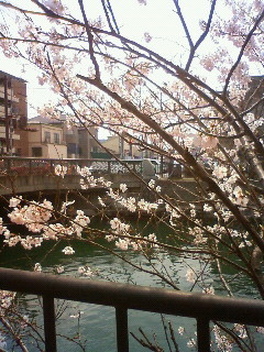 f:id:kusaboshi:20110324115400j:image