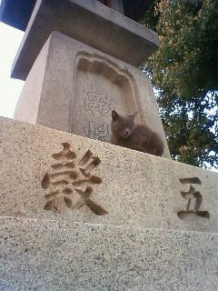 f:id:kusaboshi:20110331180600j:image