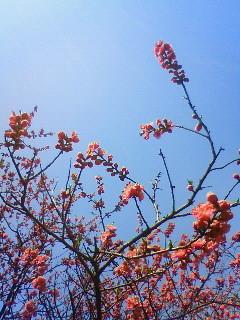 f:id:kusaboshi:20110402100400j:image