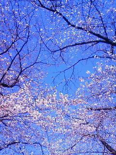 f:id:kusaboshi:20110405101300j:image