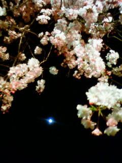 f:id:kusaboshi:20110413195000j:image
