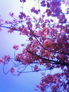 f:id:kusaboshi:20110421121200j:image