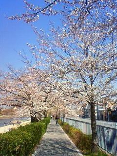 f:id:kusaboshi:20120408103500j:image