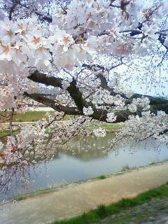 f:id:kusaboshi:20120410102800j:image