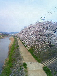 f:id:kusaboshi:20120410102900j:image