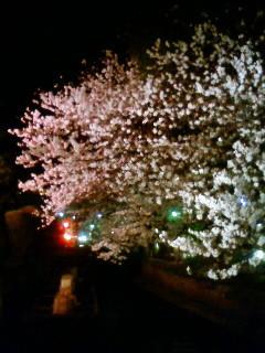 f:id:kusaboshi:20120410225600j:image