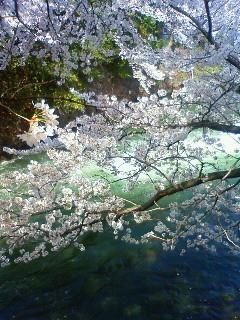 f:id:kusaboshi:20120412131400j:image