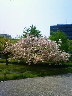 f:id:kusaboshi:20120424102800j:image