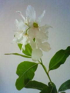 f:id:kusaboshi:20120425112000j:image