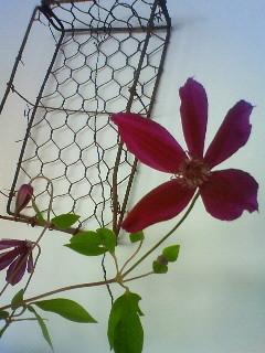 f:id:kusaboshi:20120606124200j:image