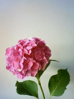 f:id:kusaboshi:20120626145800j:image