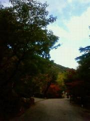 f:id:kusaboshi:20121101161500j:image