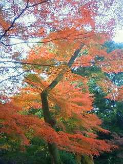 f:id:kusaboshi:20121122143500j:image