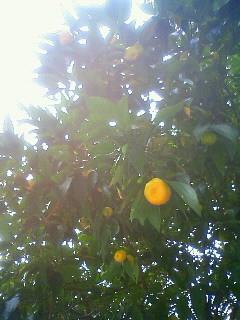 f:id:kusaboshi:20121129150100j:image