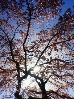 f:id:kusaboshi:20130321141800j:image
