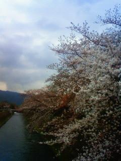 f:id:kusaboshi:20130329101800j:image