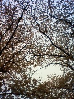 f:id:kusaboshi:20130331095300j:image