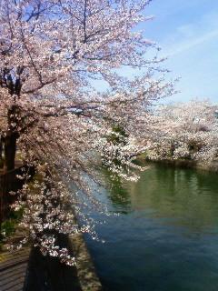 f:id:kusaboshi:20130401103500j:image