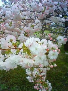 f:id:kusaboshi:20130410100000j:image