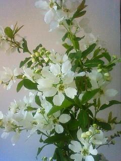 f:id:kusaboshi:20130413113000j:image