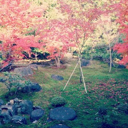 f:id:kusaboshi:20131207195904j:image:w300