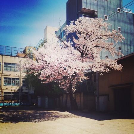 f:id:kusaboshi:20140407123944j:image:w300