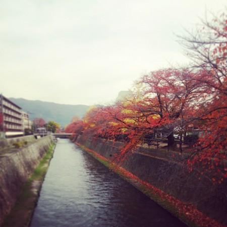 f:id:kusaboshi:20141120105431j:image:w230