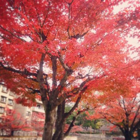 f:id:kusaboshi:20141120210603j:image:w230