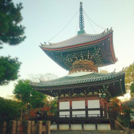 f:id:kusaboshi:20141120210858j:image:w230