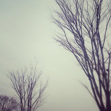 f:id:kusaboshi:20141231180941j:image:w300