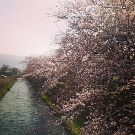 f:id:kusaboshi:20150331184207j:image:w260
