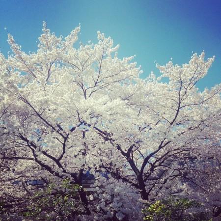 f:id:kusaboshi:20150402195751j:image:w300